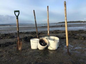 CLAM DIGGERS, CLAM DIGGING, CARRYING A CLAM BUCKET
